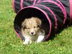 Charlie Morris Puppy 6 wks(c)
