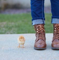 Cute Chicks!