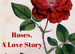 Roses, A Love Story
