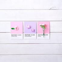 Abrazos con flores y colores ✨🌸 #MimiVe