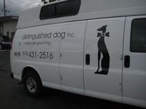 Distinguished Dog 1.JPG