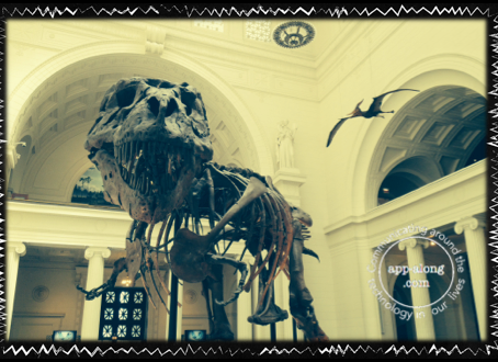 JME in Action: The Field Museum