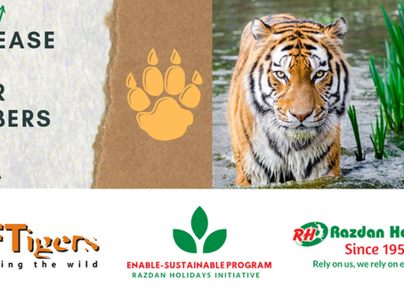 Good news on International Tiger Day & broadening our support to the conservation of wildlife