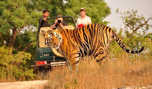 wildlife-safari.jpg