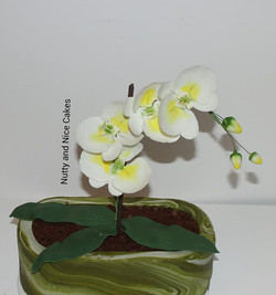 Orchid Flower Cake