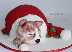Cat in a hat1
