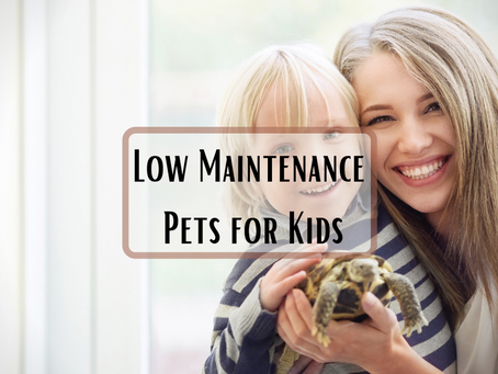 Low Maintenance Pets for Kids