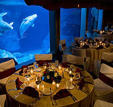 shark-encounter-via-seaworldparks.com_.j