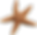 Starfish-PNG-Images.png