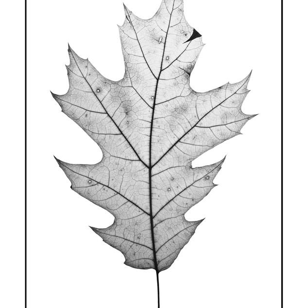 XMAS19- Botanica 3