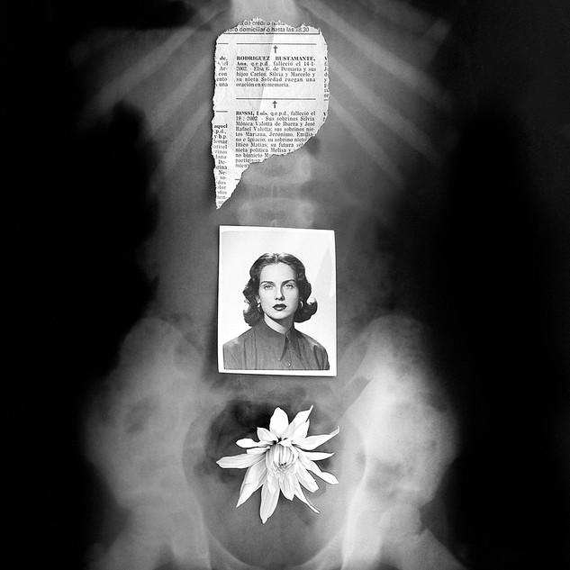 Flor de Polvo - serie expuesta en la Galeria Arte x Arte. Ioana Menéndez, freelance photography  I  Fotografías de autor y comerciales.