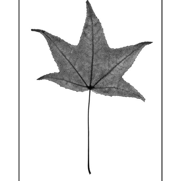 XMAS 18- Botanica 2