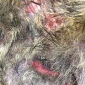Dermatologie_bearb.jpg