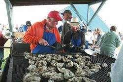 2008 Oyster Feed