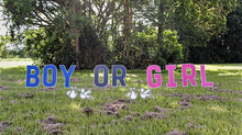 The Gender Reveal and a Unique Twist