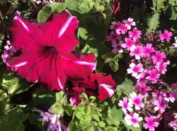 Moonwater flowers