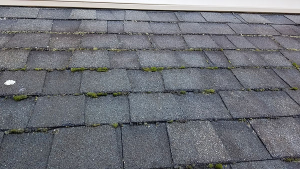Algae and moss roof cleaning .jpg