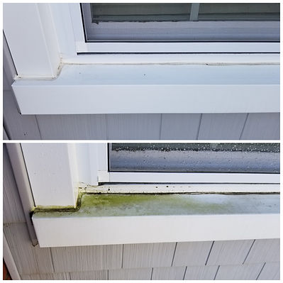 Cleaning Algae from a house.jpg