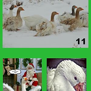 Winter/Christmas Contest
