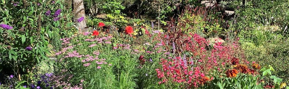 GH front yarrow penstemon rose geranium
