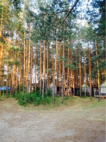 Летние домики в лесу