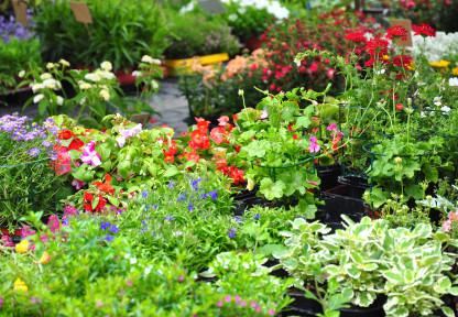 PlantFlowerSale.jpg
