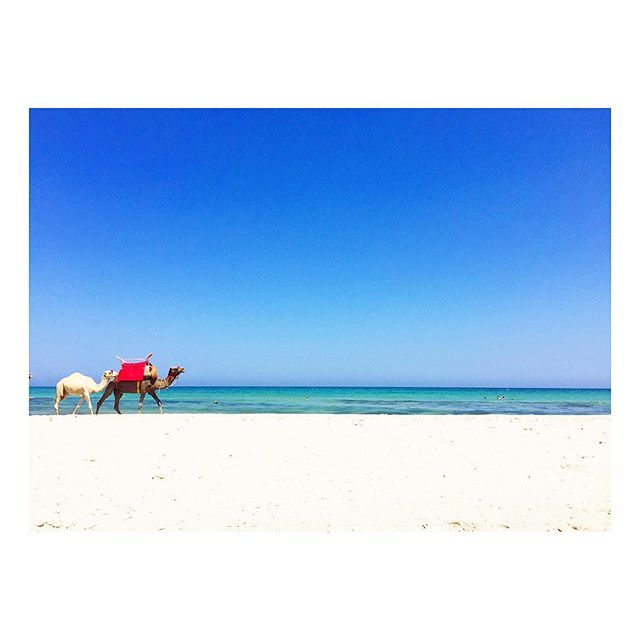 🐪 #beach #camel #djerbaladouce #beautiful #relaxing #lifeinblue #summer