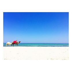 🐪 #beach #camel #djerbaladouce #beautiful #relaxing #lifeinblue #summer