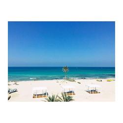 #beach #summer #djerbaladouce #palmtrees #mediterranean #sea #whitesand