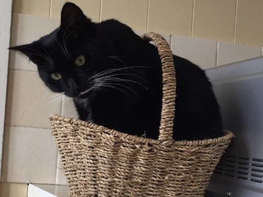 Contentment in a basket