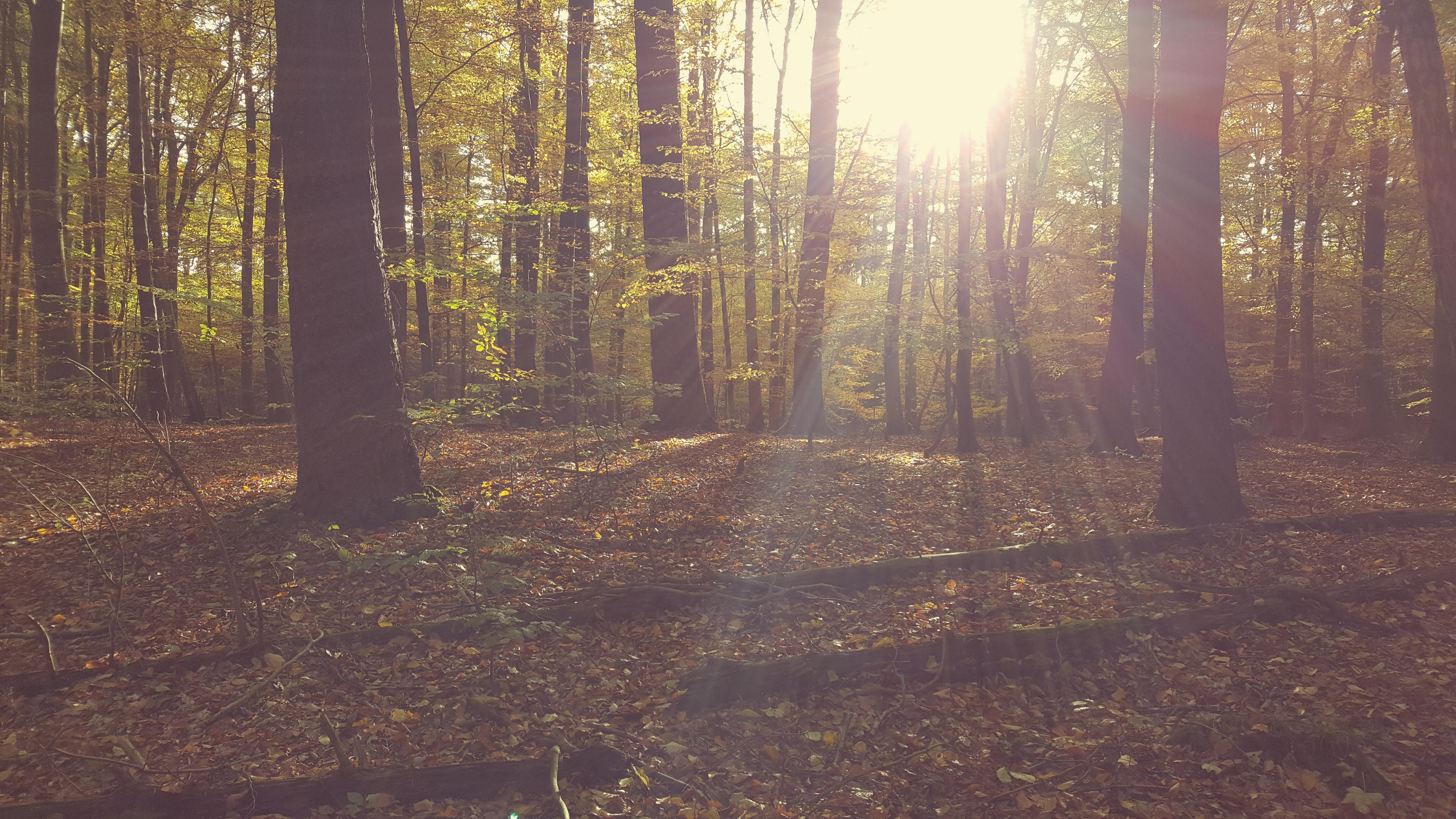 Priwall im Herbst