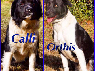 Meet Calli & Orthis! FAV's DOUBLE FEATURE Dogs of the Week