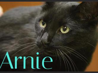 Meet Arnie! FAV's Cat of the Week