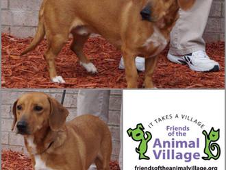 Meet Lenny! FAV's Dog of the Week
