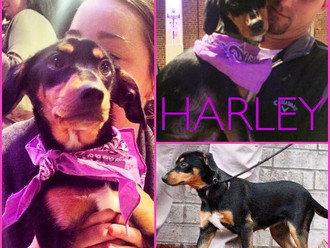 Meet Harley! FAV's Dog of the Week