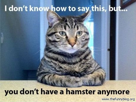 i dont know how to say this you dont have a hamster anymore.jpg