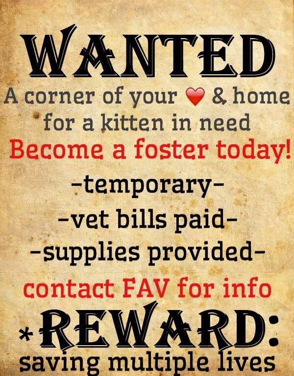 Kitten Foster Poster.JPG