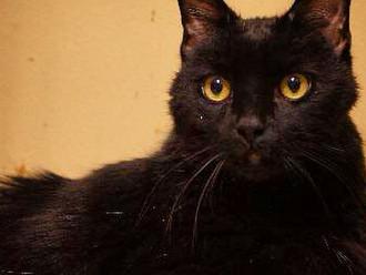 Meet Toby! FAV's Cat of the Week
