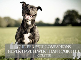 15 Beautiful Quotes About Animals
