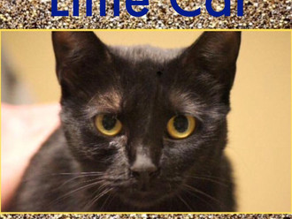 Meet Little Cat! FAV's Cat of the Week