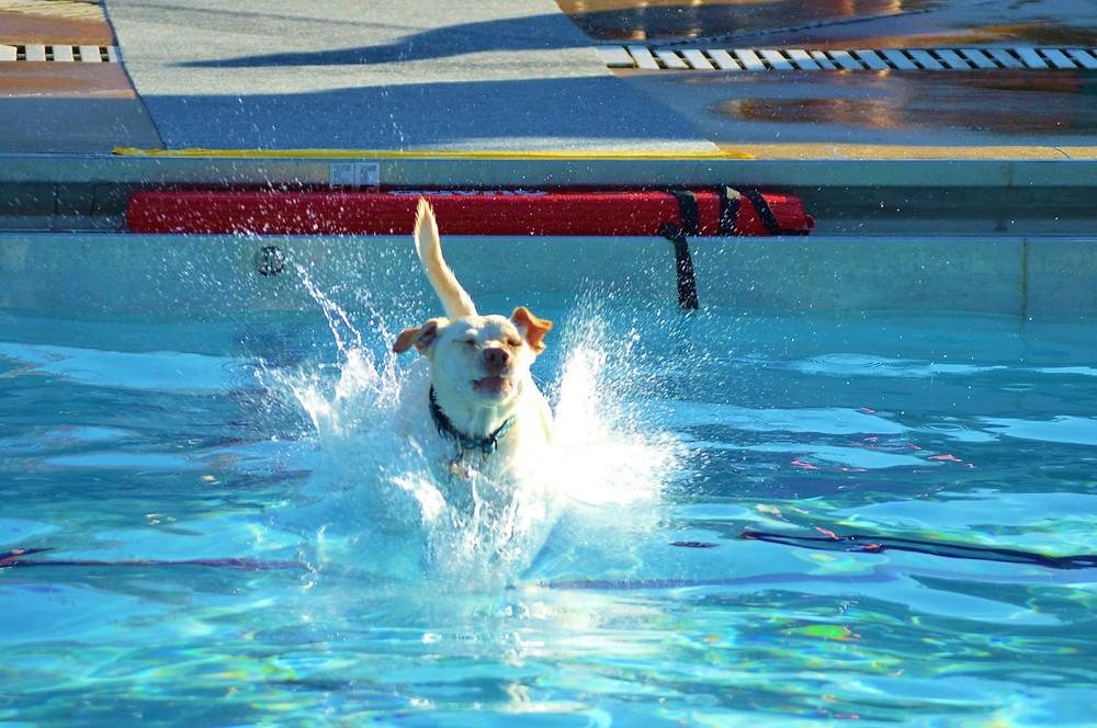 Doggie Paddle Day_Splash 2.jpg