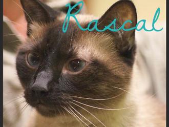 Meet Rascal! FAV's Cat of the Week