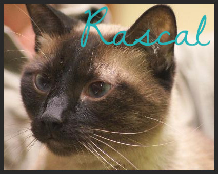 Rascal (Pet ID# 36428)_Little Rock Animal Village_Friends of the Animal Village