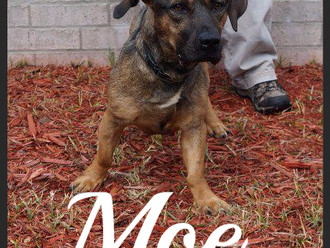 Meet Moe! FAV's Dog of the Week