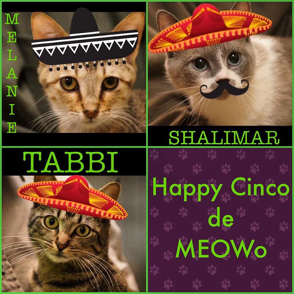 Happy Cinco de MEOWo!
