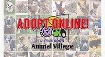 adopt online.webp