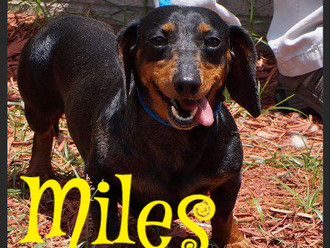 Meet Miles! FAV's Dog of the Week