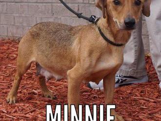 Meet Minnie! FAV's Dog of the Week