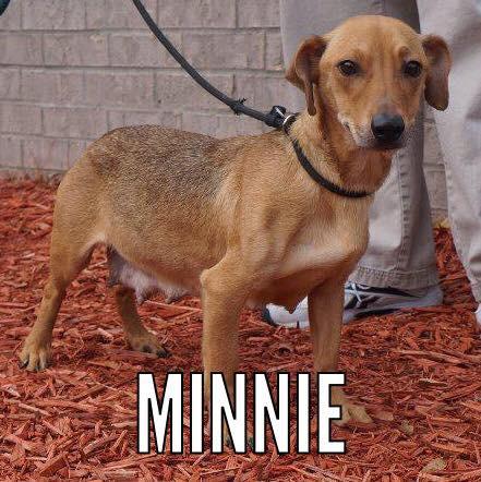 Minnie_Pet ID# 33954_Little Rock Animal Village_Friends of the Animal Village.jpg