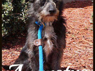 Meet Augustus! FAV's Dog of the Week